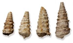 Sistema Museale Agno Chiampo